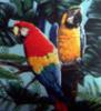 parrot_gallery.jpg